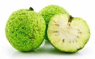 Применение адамова яблока для лечения заболеваний