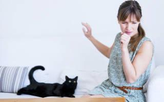 Можно ли заводит кошку при аллергии