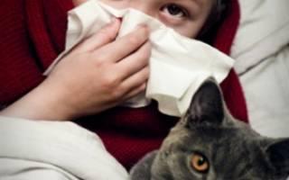 Аллергия на кота у ребенка