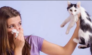 Таблетки от аллергии на животных