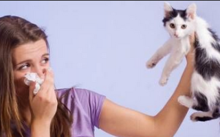 Средство от аллергии на кошек