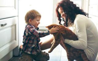 Аллергия на животных у взрослых симптомы