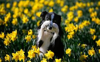 Аллергия на собак как лечить