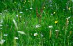 Аллергия у ребенка на травы