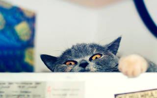 Аллергия кошка