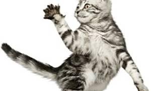 Аллергия на кошачьи царапины