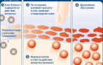 Диета при аллергическом дерматите