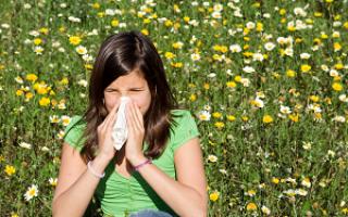 Амброзия аллергия симптомы